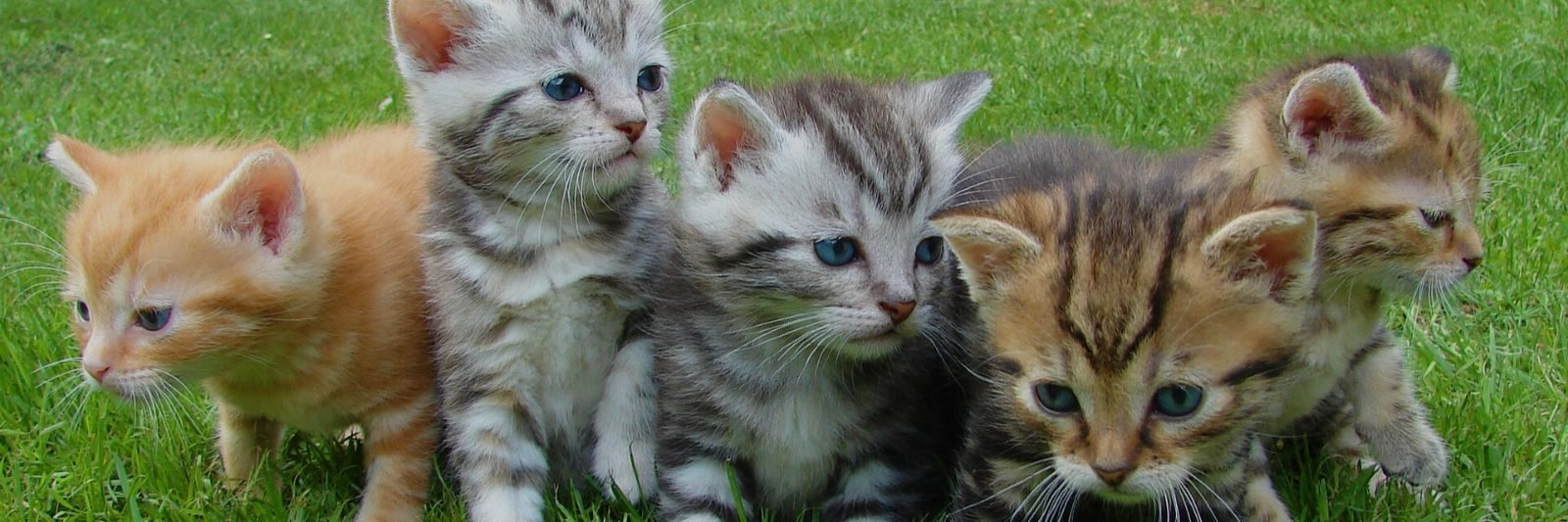 CBD for Cats banner