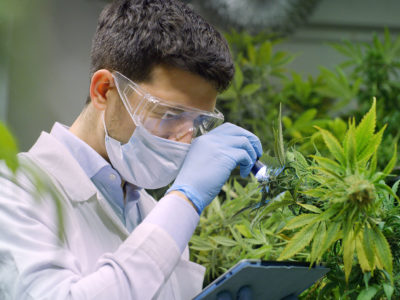 CBD lab test conducted by scientist