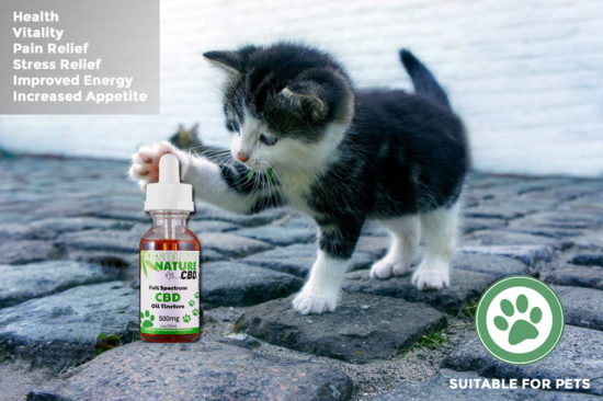 Full-spectrum CBD Oil for Pets by Absolute Nature, 500mg, cat