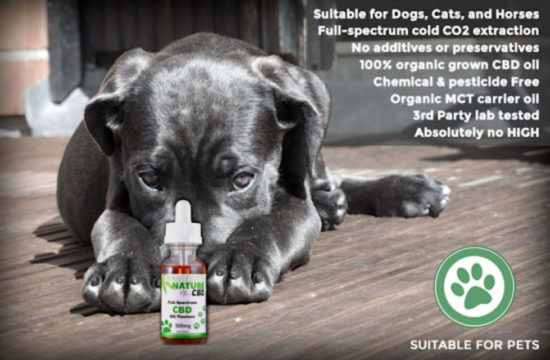 Full-spectrum CBD Oil for Pets by Absolute Nature, 500mg, dog